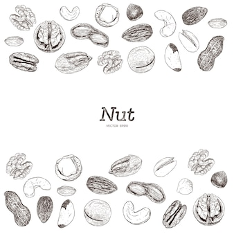 Kolekcja orzechów i nasion, szkic rysowany ręcznie.