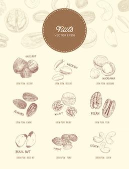 Kolekcja orzechów i nasion