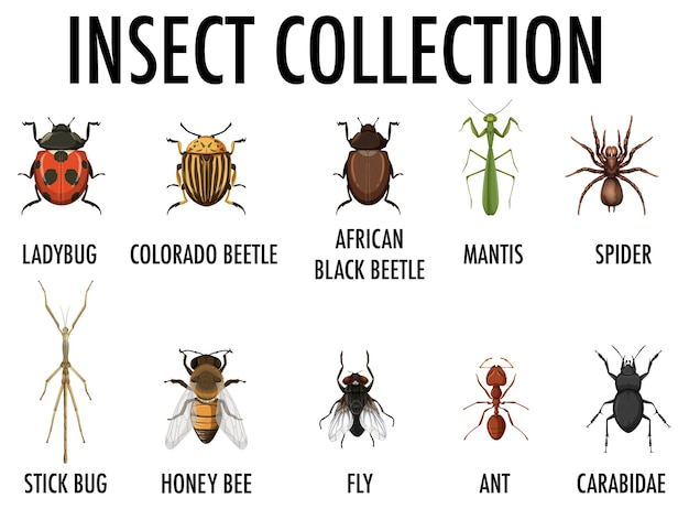 Kolekcja owadów na białym tle