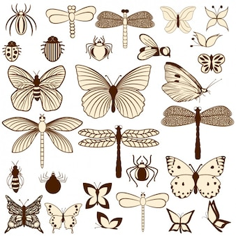 Kolekcja owady