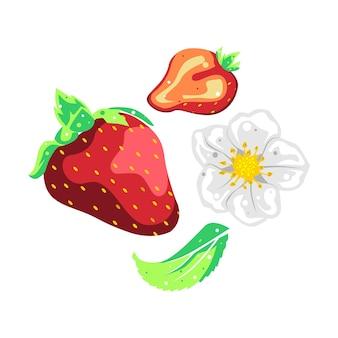Kolekcja owoców truskawek, kwiatów i liści