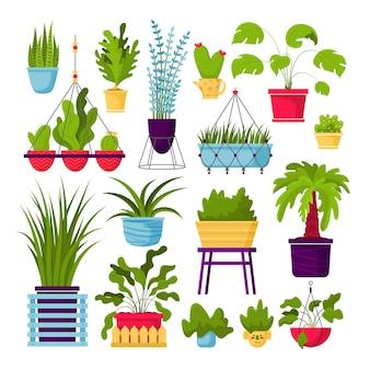 Kolekcja ozdobnych roślin doniczkowych na białym tle