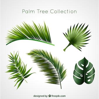 Kolekcja palmy