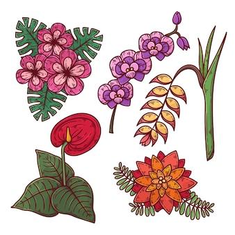 Kolekcja pięknych egzotycznych kwiatów