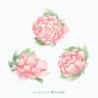 Kolekcja pięknych kwiatów piwonii akwarela