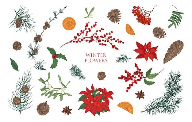 Kolekcja pięknych zimowych roślin ozdobnych na białym tle. pakiet tradycyjnych naturalnych ozdób choinkowych. ilustracja kolorowy botaniczny wektor w eleganckim stylu vintage.