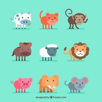 Kolekcja pięknych zwierząt