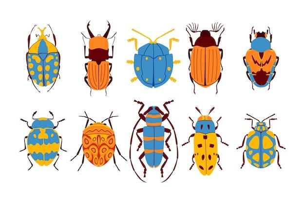 Kolekcja płaskich chrząszczy.