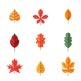 Kolekcja płaskich elementów jesiennych