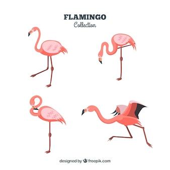 Kolekcja płaskich flamingów w różnych pozach