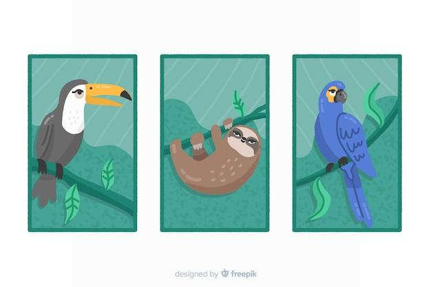 Kolekcja płaskich kart dzikich zwierząt