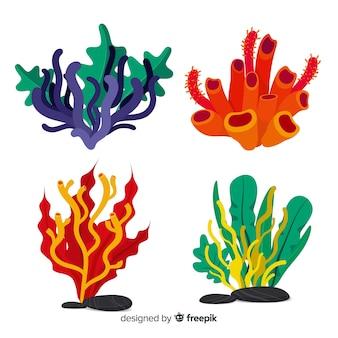 Kolekcja płaskich koralowców