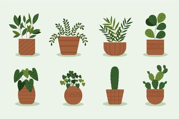 Kolekcja płaskich roślin doniczkowych