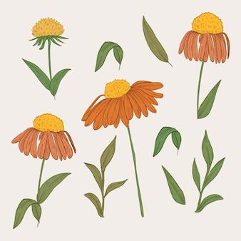 Kolekcja pomarańczowych kwiatów w stylu vintage botanika