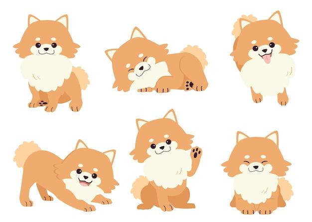 Kolekcja pomorskiego psa w wielu akcjach. zasób graficzny o zestawie psów pomeranian f