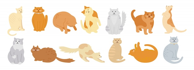 Kolekcja postaci kota. zestaw ładny płaski kreskówka projekt. różne rasy kotów, postacie zwierząt domowych. śmieszne koty siedzą i śpią. różne kolory, cętki w paski. ręcznie rysowane ilustracja na białym tle
