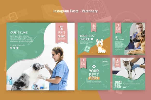 Kolekcja postów na instagramie dla weterynarii