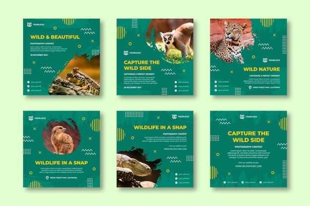 Kolekcja postów na instagramie dzikiej przyrody