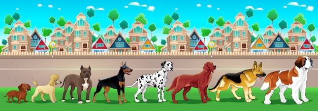 Kolekcja psów czystej krwi wyrównana na widok miasta wektor cartoon ilustracji