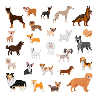 Kolekcja psów różnych ras