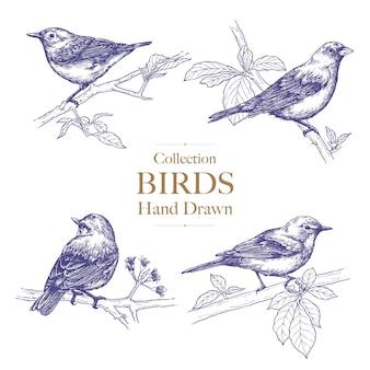 Kolekcja ptak siedzący na gałęzi, rysunek tuszem, wyciągnąć rękę.