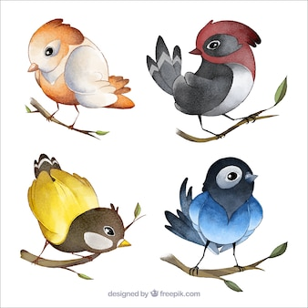 Kolekcja ptaków akwarela