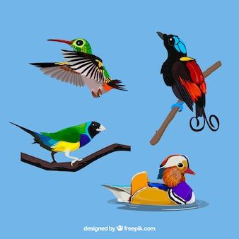 Kolekcja ptaków egzotycznych płaski