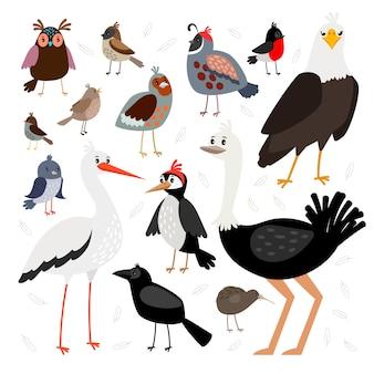 Kolekcja ptaków na białym tle