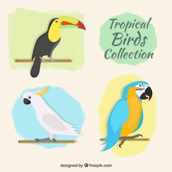Kolekcja ptaków tropical