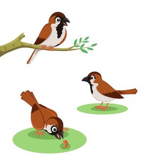 Kolekcja ptaków wróbli