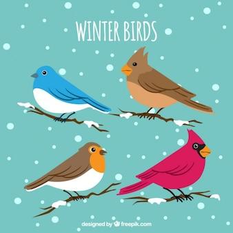 Kolekcja ptaków zimą na gałęziach