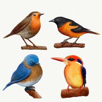 Kolekcja ptaków