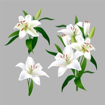 Kolekcja realistycznych białych kwiatów