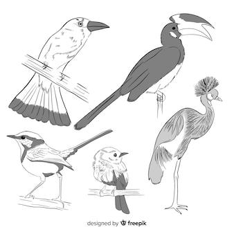 Kolekcja ręcznie rysowane egzotycznych ptaków
