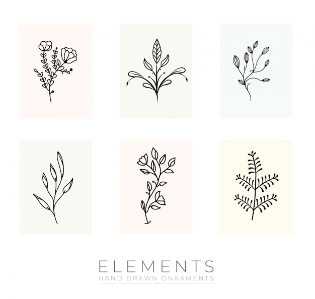 Kolekcja ręcznie rysowane elementy botaniczne