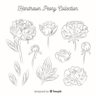 Kolekcja ręcznie rysowane kwiaty piwonii
