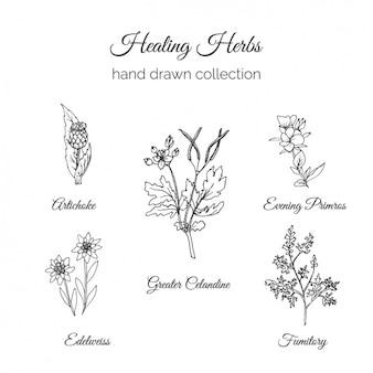 Kolekcja ręcznie rysowane kwiaty