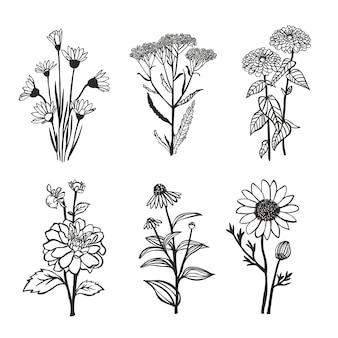 Kolekcja ręcznie rysowane kwiaty.
