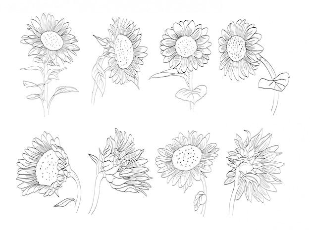 Kolekcja ręcznie rysowane słonecznika