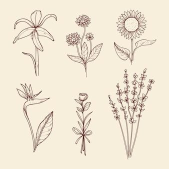 Kolekcja ręcznie rysowane vintage botanika kwiatów