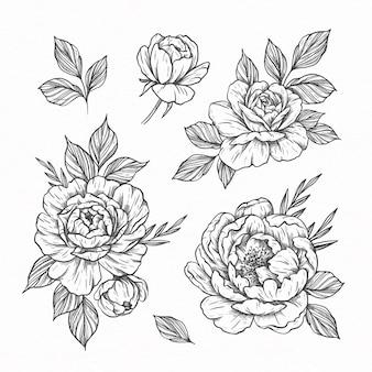 Kolekcja ręcznie rysowanych kwiatów i liści
