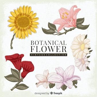 Kolekcja rocznika botaniczny kwiat
