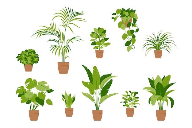 Kolekcja roślin domowych. rośliny doniczkowe