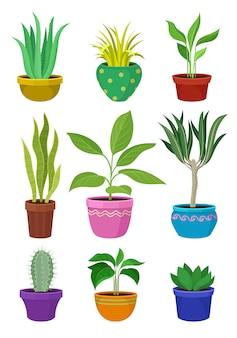 Kolekcja roślin domowych w kolorowych doniczkach.