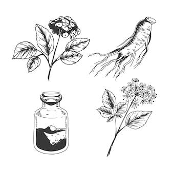 Kolekcja roślin żeń-szenia