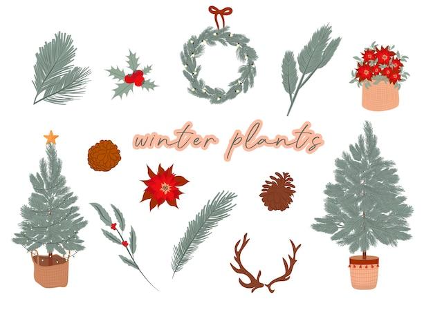 Kolekcja roślin zimowych choinka zimowy wieniec kwiatów gałąź stożek edytowalna ilustracja