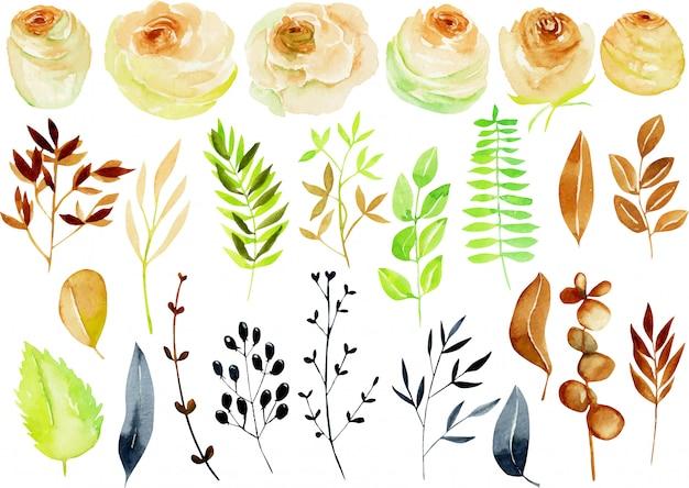 Kolekcja róż akwarela, gałęzie i liście herbaty