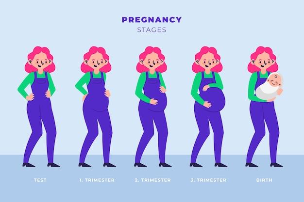 Kolekcja różnych etapów ciąży