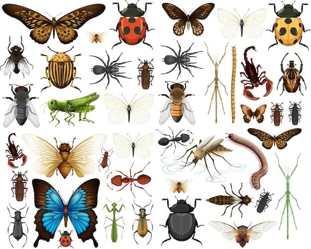 Kolekcja różnych owadów na białym tle