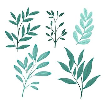 Kolekcja różnych płaskich liści